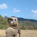 olifant en berijder